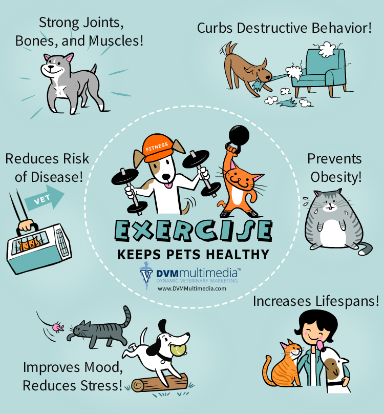 Pets Exercise Tips - Pet Health - North of the River Vet