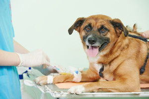 Pet Surgery Services in Bakersfield CA - (661) 399-6406