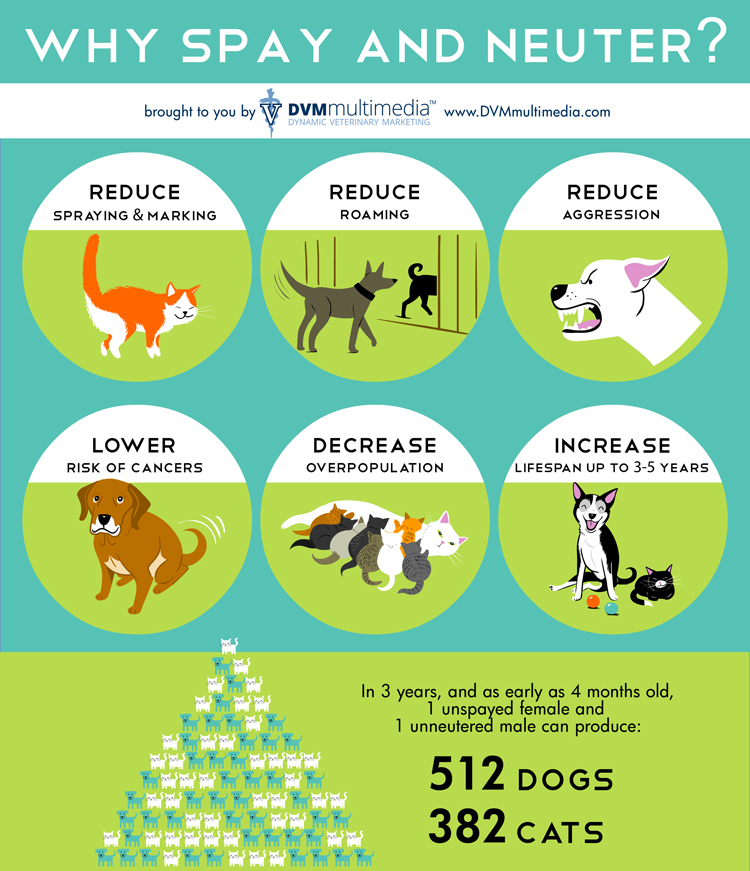 Why Spay or Neuter?