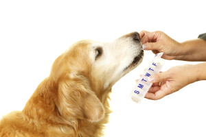 Pet Pharmacy - Bakersfield CA - (661) 399-6406
